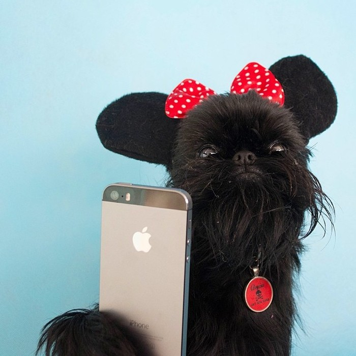 Fashion-Dogs-Puppies-16