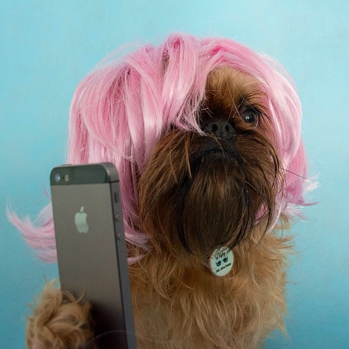 Fashion-Dogs-Puppies-17