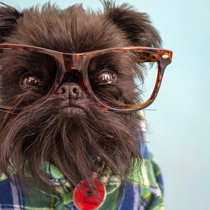 Fashion-Dogs-Puppies-20