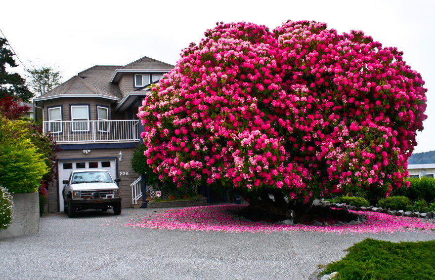 Most-Beautiful-Trees-In-World-01