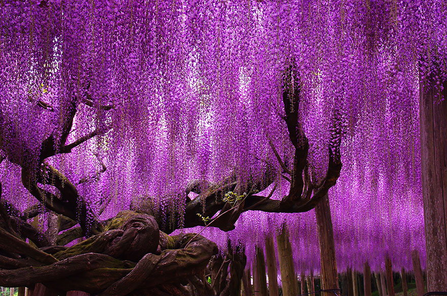 Most-Beautiful-Trees-In-World-02-1