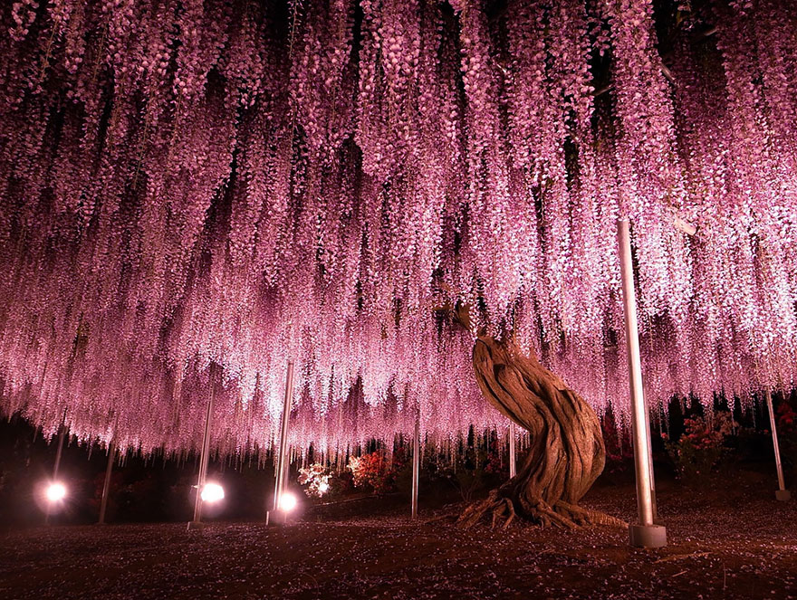 Most-Beautiful-Trees-In-World-02-2