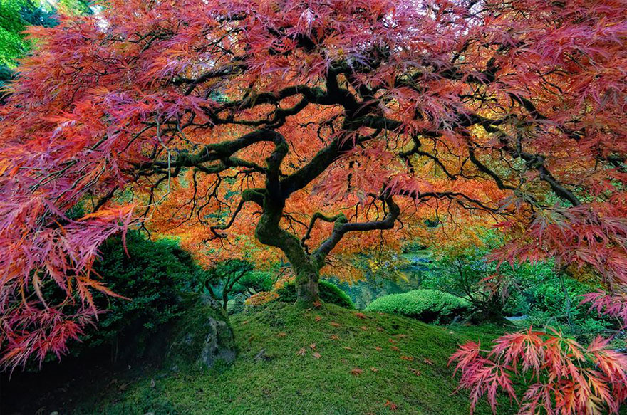 Most-Beautiful-Trees-In-World-04