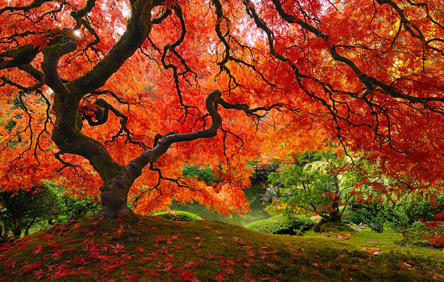 Most-Beautiful-Trees-In-World-05