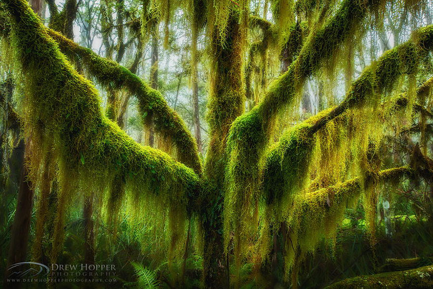 Most-Beautiful-Trees-In-World-06