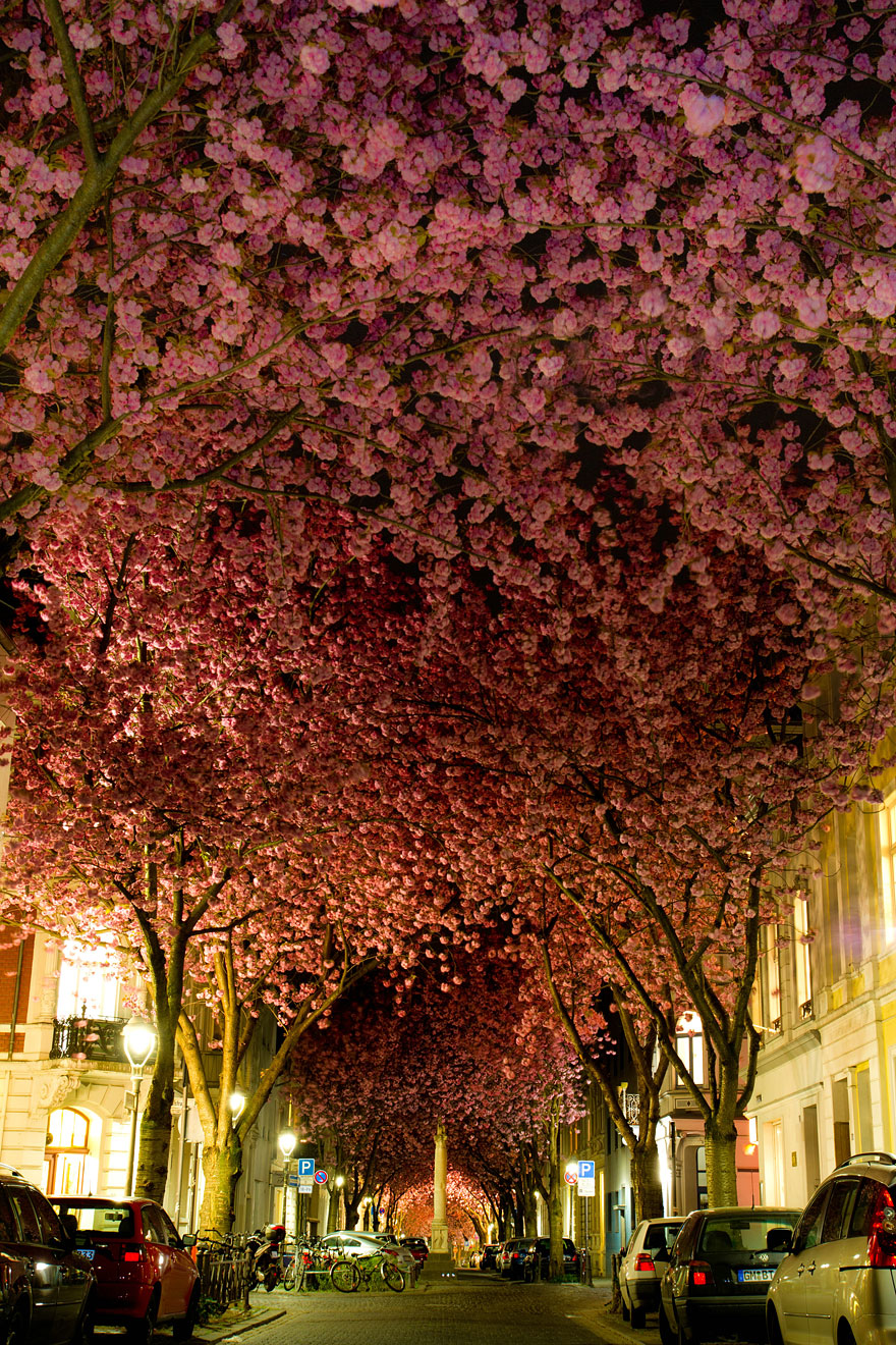 Most-Beautiful-Trees-In-World-07