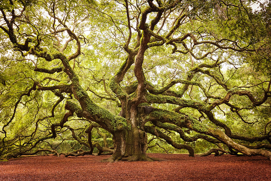 Most-Beautiful-Trees-In-World-08