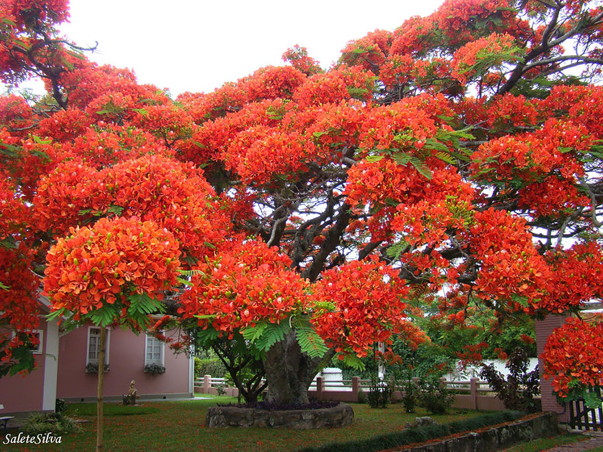 Most-Beautiful-Trees-In-World-09