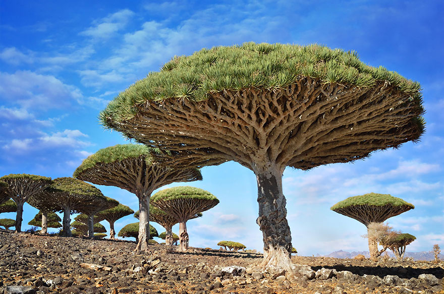 Most-Beautiful-Trees-In-World-10