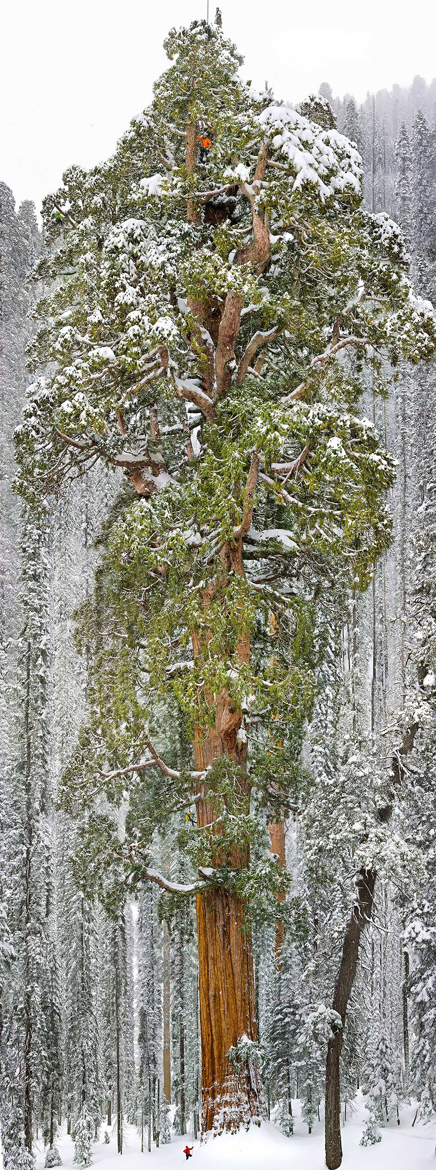 Most-Beautiful-Trees-In-World-11