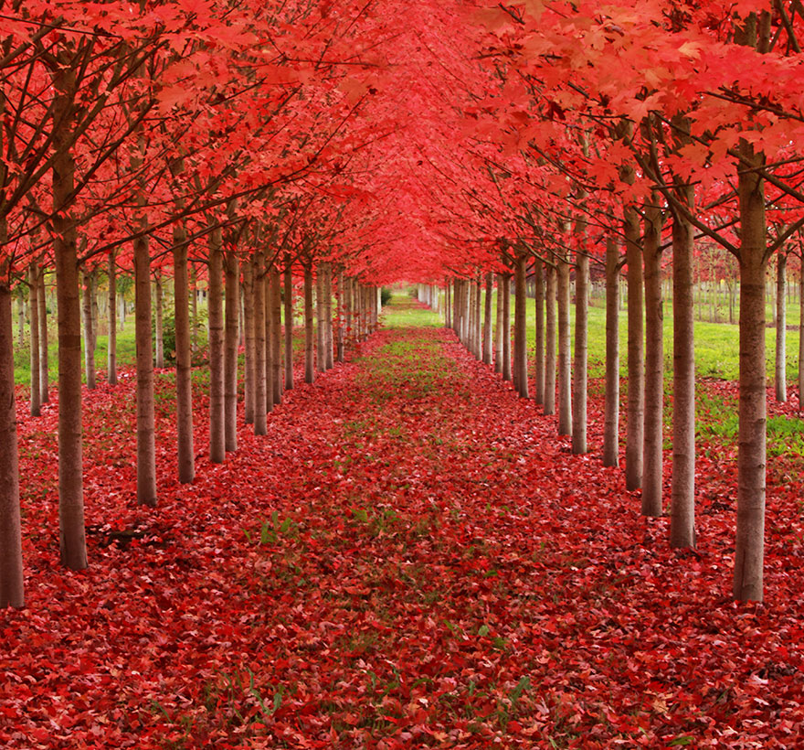Most-Beautiful-Trees-In-World-12