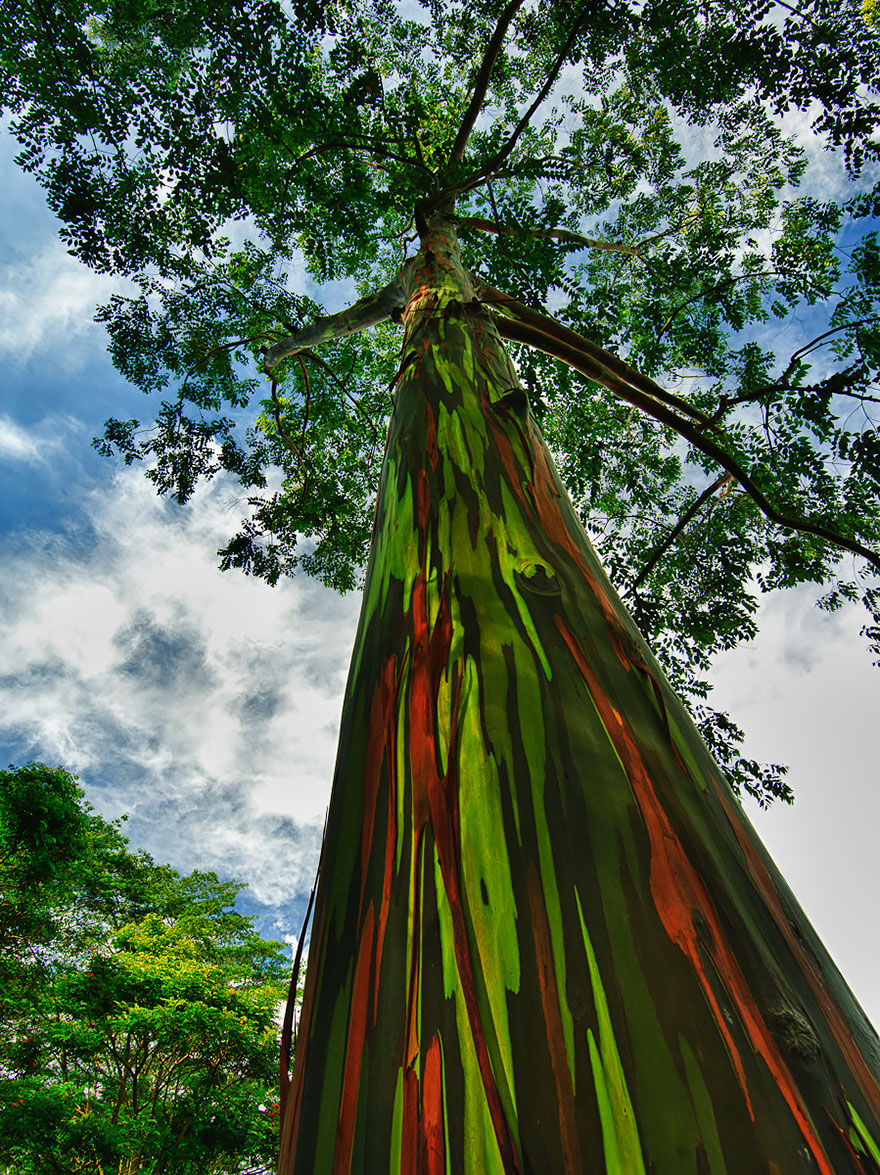 Most-Beautiful-Trees-In-World-13-1
