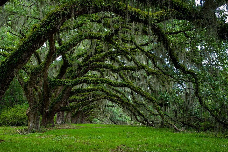 Most-Beautiful-Trees-In-World-15