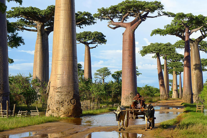 Most-Beautiful-Trees-In-World-16