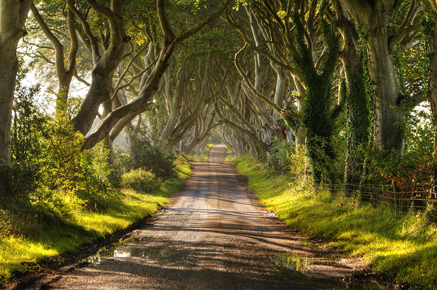 Most-Beautiful-Trees-In-World-17-2