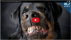 Scared Of Aggressive Dog Breeds? This Bias Is Debunked!