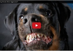 Proof-That-Aggressive-Dog-Breeds-Dont-Exist-00