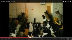 130 Cats In 1 Apartment! This Russian Lady Is Unbelievable…