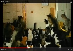 Russian-Cat-Lady-130-Cats-1-Apartment-01