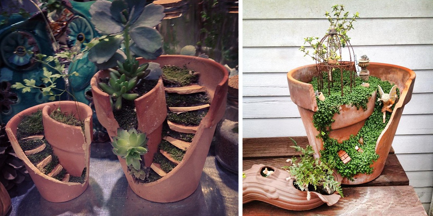 Money Plant Pot Ideas