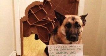 World's Naughtiest Dogs: 25 Images That Will Make You Laugh